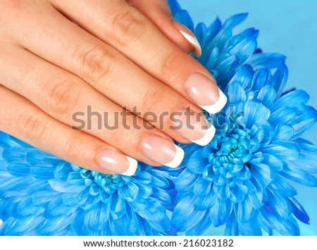 Beautiful woman's hand with perfect french manicure on blue chrysanthemum flower - stock photo