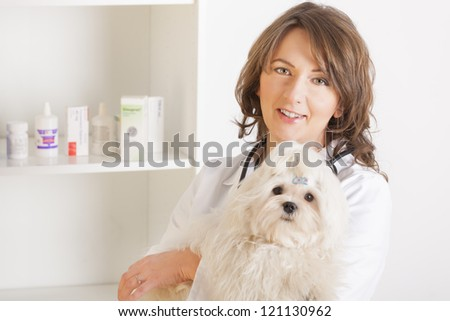 Beautiful woman veterinarian holding cute maltese dog standing in the treatment room - stock photo