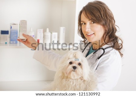 Beautiful woman veterinarian holding cute maltese dog standing in the treatment room and reaching for medicine - stock photo
