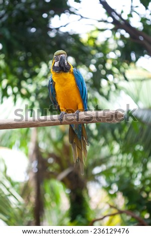 Beautiful yellow and blue macaw perched on a wooden post  - stock photo