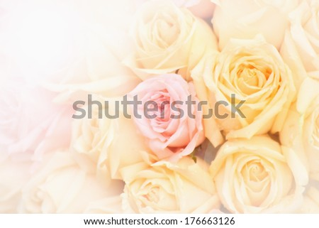 Beautiful yellow and pink roses background,selective focus - stock photo