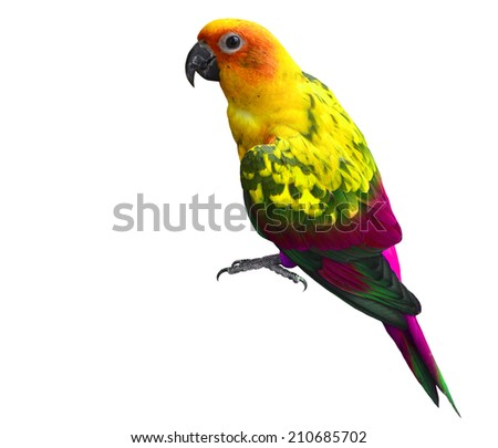 Beautiful Yellow and Purple Parrot bird isolated on white background - stock photo