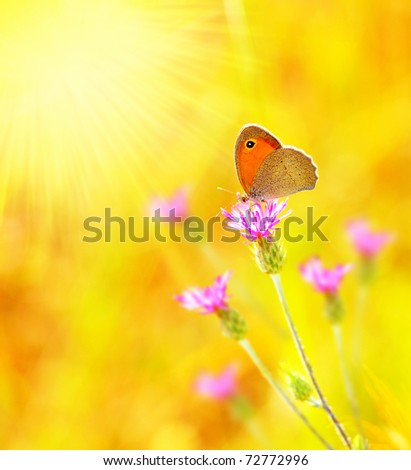Beautiful yellow butterfly extreme closeup macro, nature life in spring - stock photo