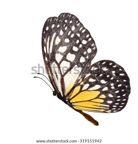 Beautiful yellow butterfly flying isolated on white background - stock photo
