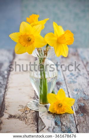 Beautiful yellow daffodils in a vase - stock photo