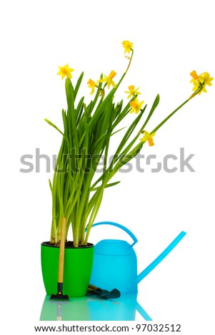 beautiful yellow daffodils, watering can and garden tools isolated on white - stock photo