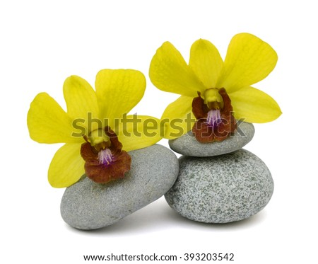 beautiful yellow dendrobium orchid flowers isolated on white background - stock photo