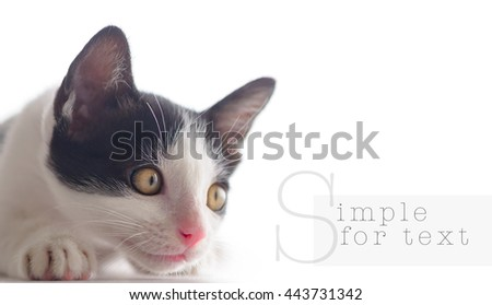 Beautiful yellow eyes domestic thai cat black and white on isolate white background. - stock photo