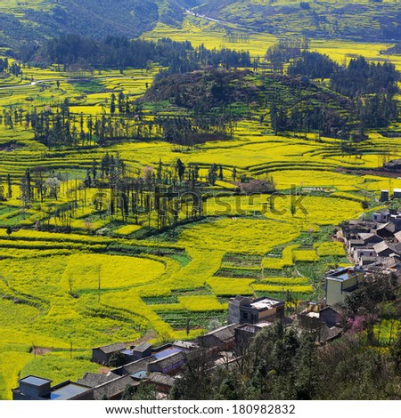 Beautiful yellow field full of rapeseed with countryside village in Luoping at Yunnan of China - stock photo