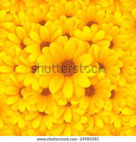 Beautiful yellow flower background - stock photo