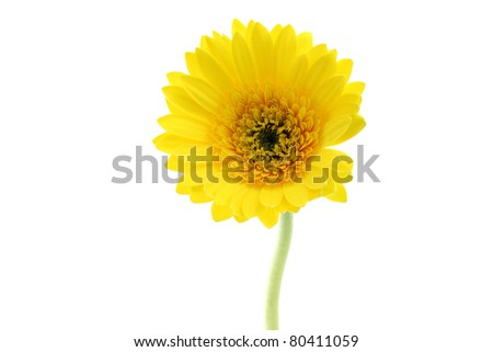 beautiful yellow flower closeup isolated in white background - stock photo