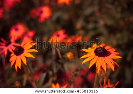 Beautiful yellow flowers with the leaves in the sunshine, vintage retro hipster image with summer bloom. Autumn orange flowers - stock photo