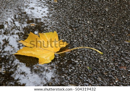 Beautiful yellow leaf on the wet road