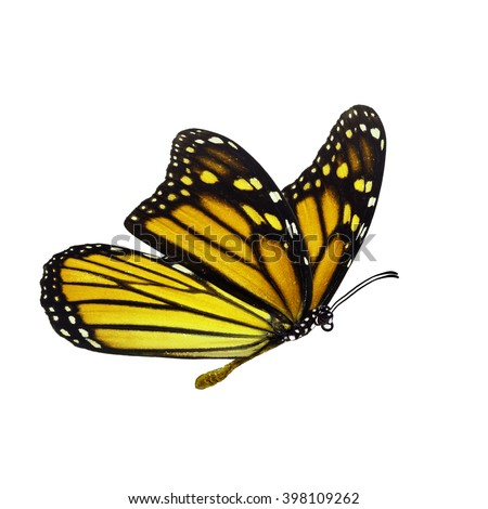 Beautiful yellow monarch butterfly isolated on white background - stock photo
