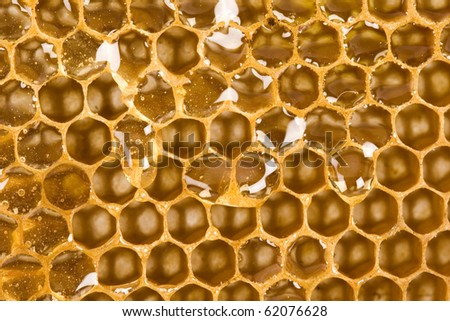 Beautiful yellow patch of healthy and tasty honey - stock photo