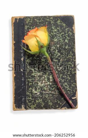 Beautiful Yellow Rose on Vintage Book - stock photo