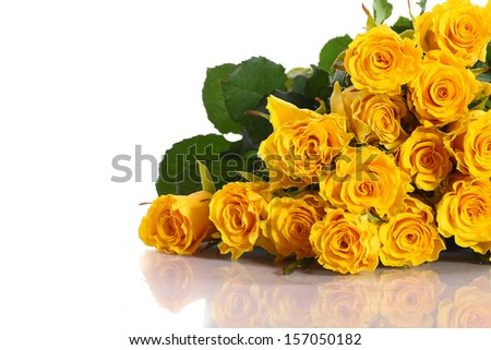 beautiful yellow roses on a white background - stock photo
