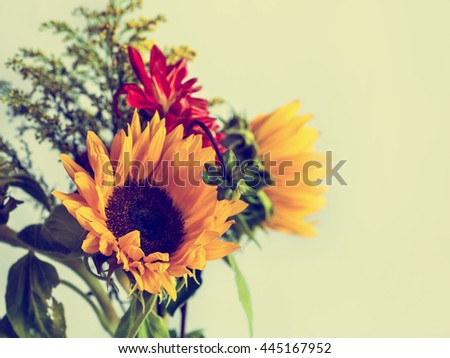 Beautiful yellow sunflowers in a vase on a white background. Summer flowers in the sunshine. - stock photo