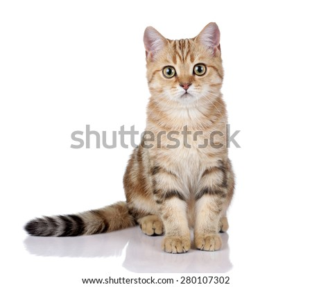 Beautiful young cat sitting on a white background - stock photo