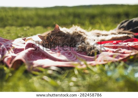 Beautiful young cat sleeping on a blanket outdoors. Resting cat in nature - stock photo