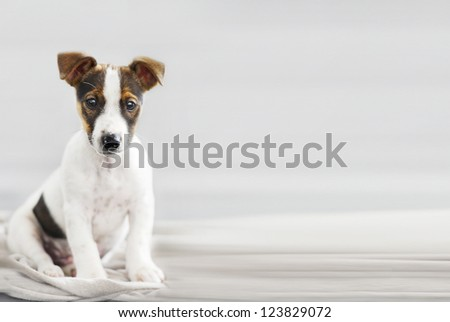 beautiful young dog sitting and watching - stock photo