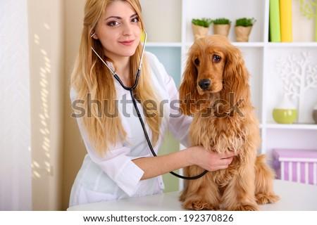 Beautiful young female veterinarian examining dog in clinic - stock photo