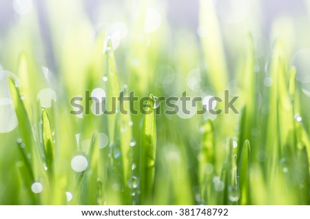 Beautiful young green grass on a sunny day background - stock photo