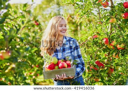 Beautiful young woman picking ripe organic apples in wooden crate in orchard or on farm on a fall day - stock photo