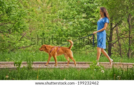 Beautiful young woman walks with dog Labrador retriever in summer park - stock photo