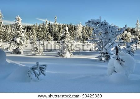 beautifull lanscape on winter time - stock photo