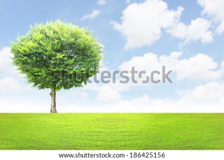 Beautifull the green tree landscape  - stock photo