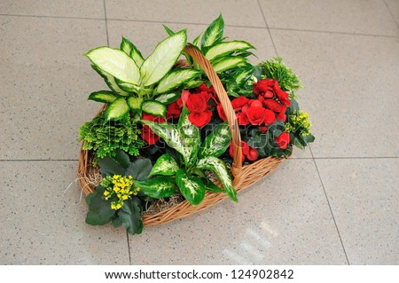 Beautifully issued bouquet from white and red flowers in the big basket - stock photo