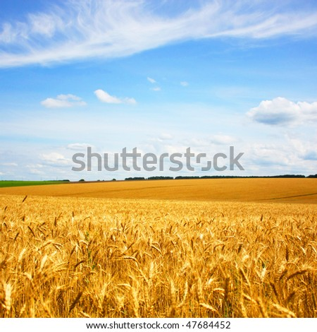 beautifully summer landscape