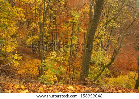 Beauty autumn forest with leaves