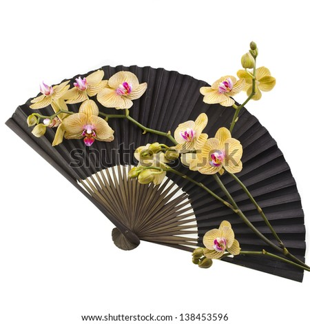 Beauty Black Japanese  Paper Fan with Fresh Flower Orchid Isolated on white background - stock photo