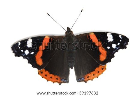 Beauty  butterfly on white with shadow. Orange, black and violet colors insect