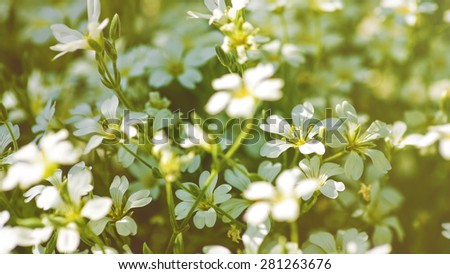 Beauty daisy flowers. Panoramic floral backgrounds for your design - stock photo