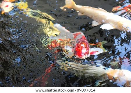 beauty fish - stock photo