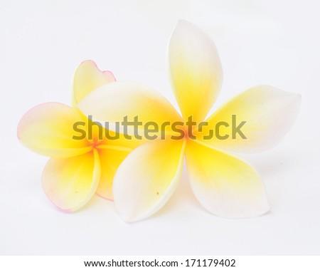 beauty frangipani flowers on white background - stock photo