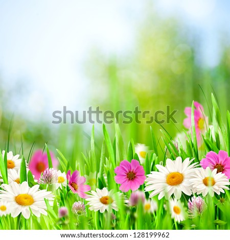 Beauty meadow. Abstract natural backgrounds for your design - stock photo