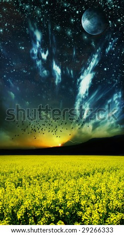 beauty of nature landscape flower field - stock photo