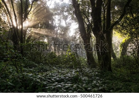 Beauty of Sunrise in rain forest