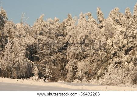 beauty of white winter - stock photo