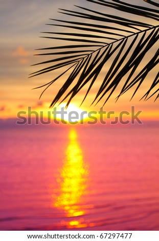 Beauty Palm Branch - stock photo