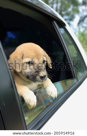 beauty puppy in the white car - stock photo