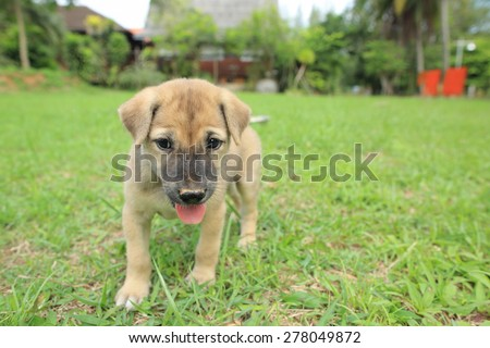 beauty puppy on the grass in park