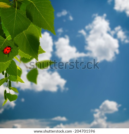 beauty summer backgrounds with green foliage and red  ladybug - stock photo