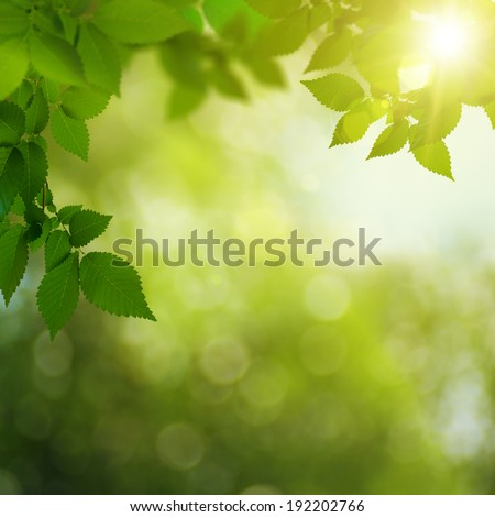 Beauty summer day in the forest, abstract environmental backgrounds - stock photo