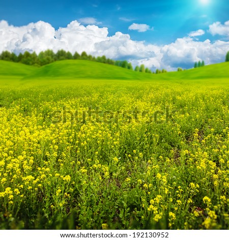 Beauty summer day on the meadow, abstract rural landscape for your design