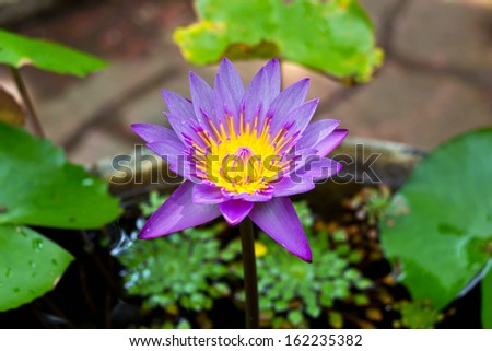Beauty water lilly flower in the baked clay jar ceramic